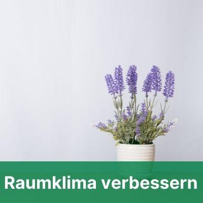 Zimmerpflanze vor Wand