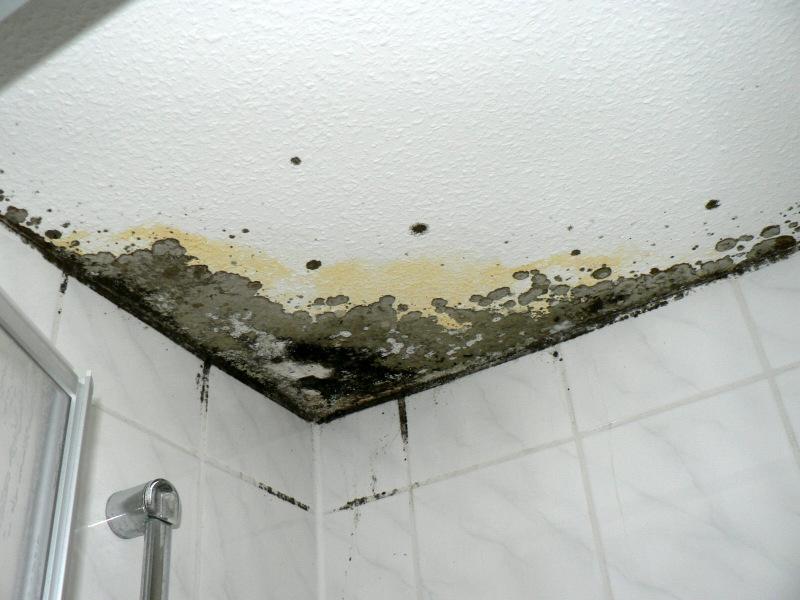 Nassräume wie Badezimmer begünstigen die Entstehung von Schimmel